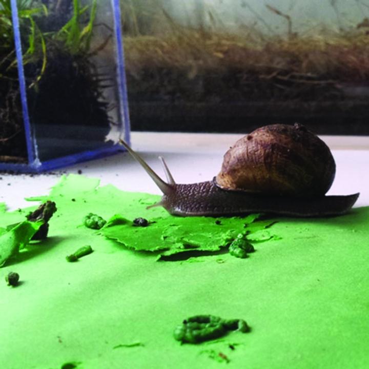 Lieske Schreuder's Snail Poo Tiles