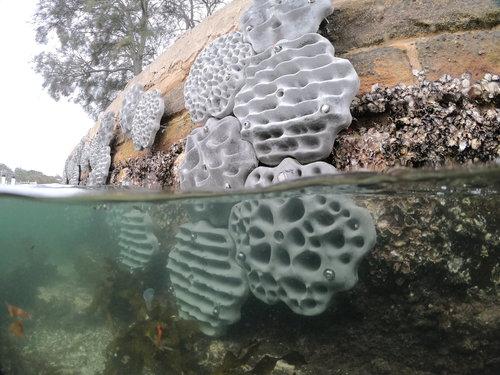 Alex-Goad-Living-Sea-Wall